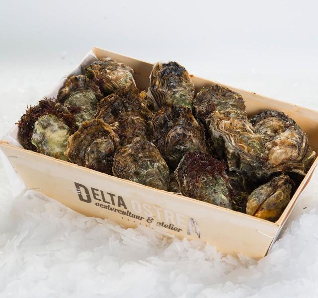 WA_oesters